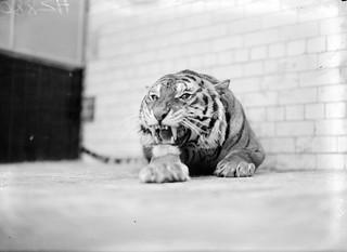 Celtic Tiger?