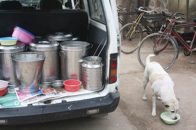 City Living - Stray Dog Feeding Sites, Around Town