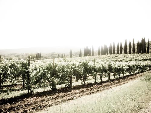 tuscany_trees_AGED.jpg