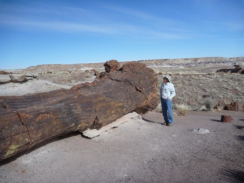 Britt and a big log