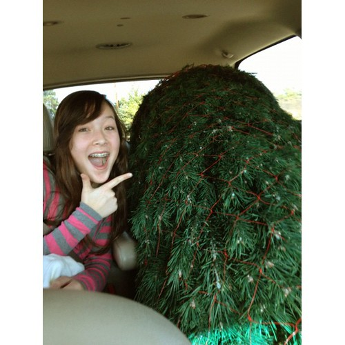 New Tree Strategy - It Won't Fall Off The Car on the Way Home