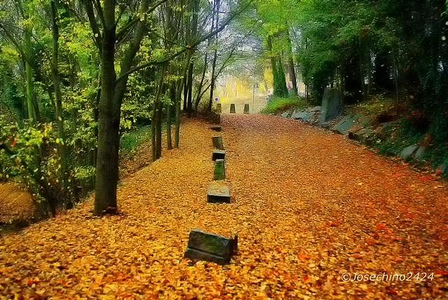 Caminando sobre hojas!!