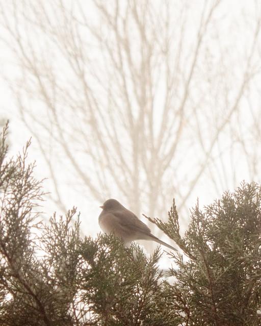 I'm as free as a bird...