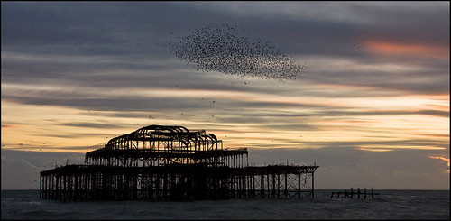 Starlings over West Pier - Brighton