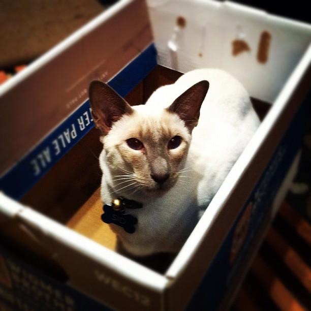 Sid in a box