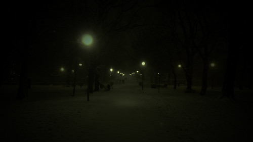 snow-night meadows