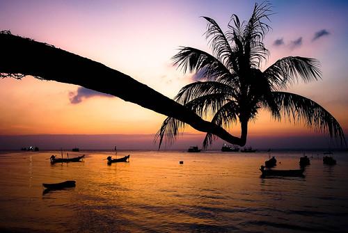 sunset beach thailand island palmtree longboat kohtao