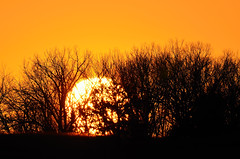 Sun behind Trees DSC_0598 by Mully410 * Images