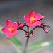 Small photo of Flower at the Bagh in Bharatpur India