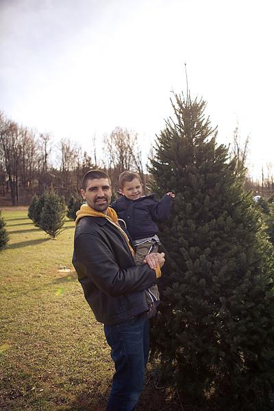 Christmas tree 2011-3
