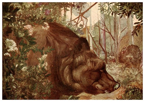 023-Baloo en la selva- The jungle book 1913-Ilustrado por Edward Detmold