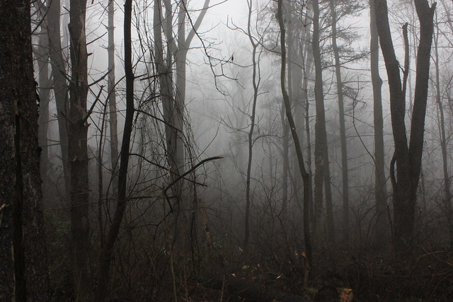 260 creepy woods