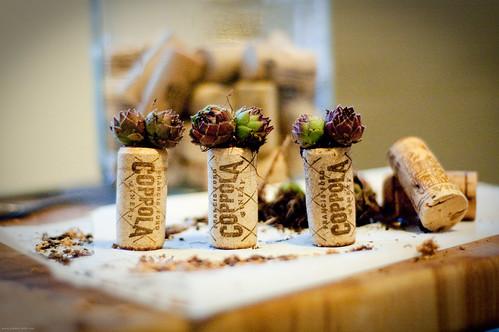 Cork terrariums!