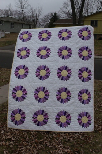 Purple Daisies complete front