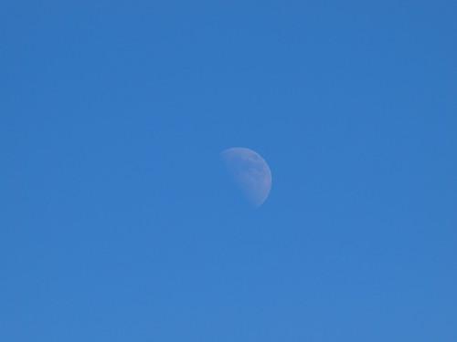 多摩動物公園 月
