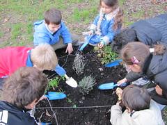 Ricominciamo a coltivare nelle scuole 34
