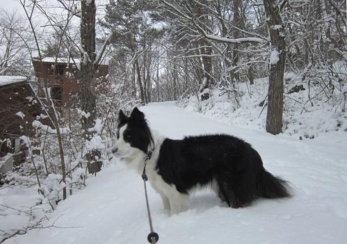 初の本格的な積雪 2012年1月5日1056 by Poran111