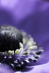 Fauna: Purple haze