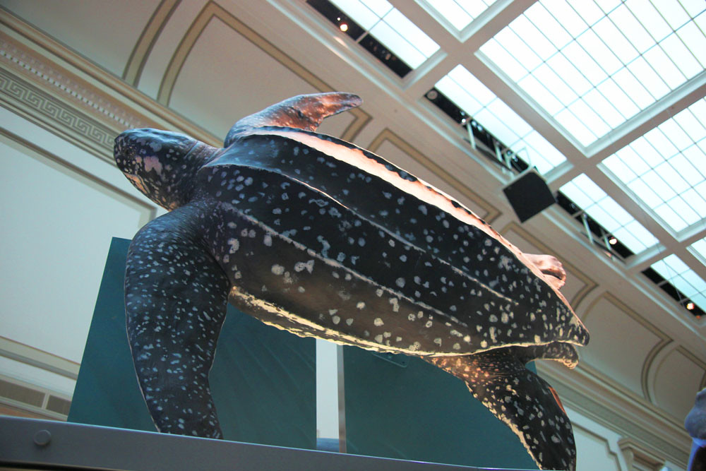 Foyer Museum Hours : Smithsonian museum hours belfast titanic