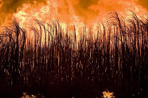 Ban Agricultural Burning