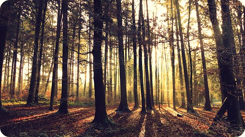 trees light sunlight sunshine forest sunrise shadows wald bäume schatten
