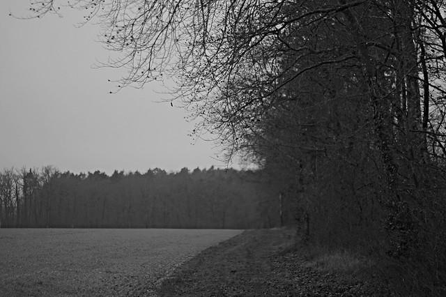 Bois sans brouillard de Gaël RAOUX, sur Flickr