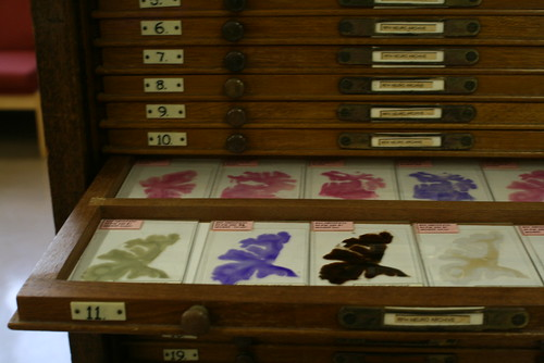 Pathology Collections images 028