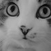 Chessie- Portrait by [elina]Lex