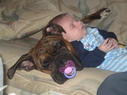 kids and pets.jpg 12