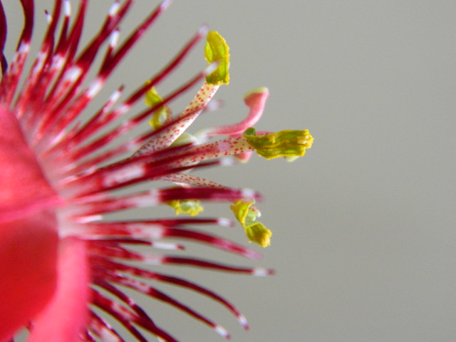 some of my passiflora - Page 3 6717517049_2ae4bb0cd7_z