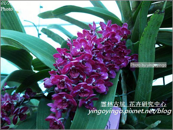 雲林古坑_花卉研究中心20120123_R0050682