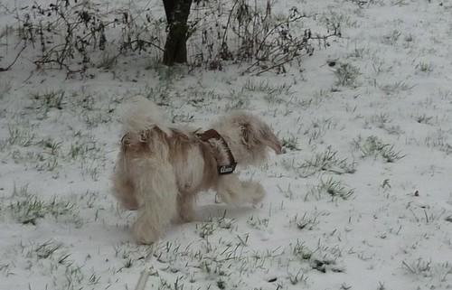 Schnee13
