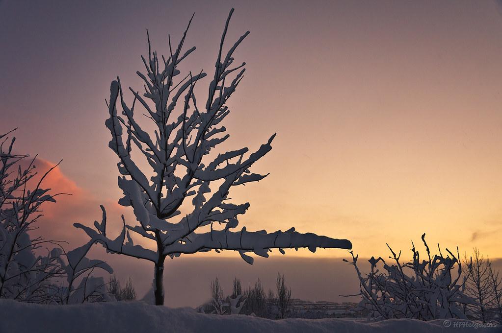 TRÉ, SNJÓR, HIMINN / TREE, SNOW, SKY