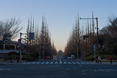 ginkgo trees - on January 29, 2012