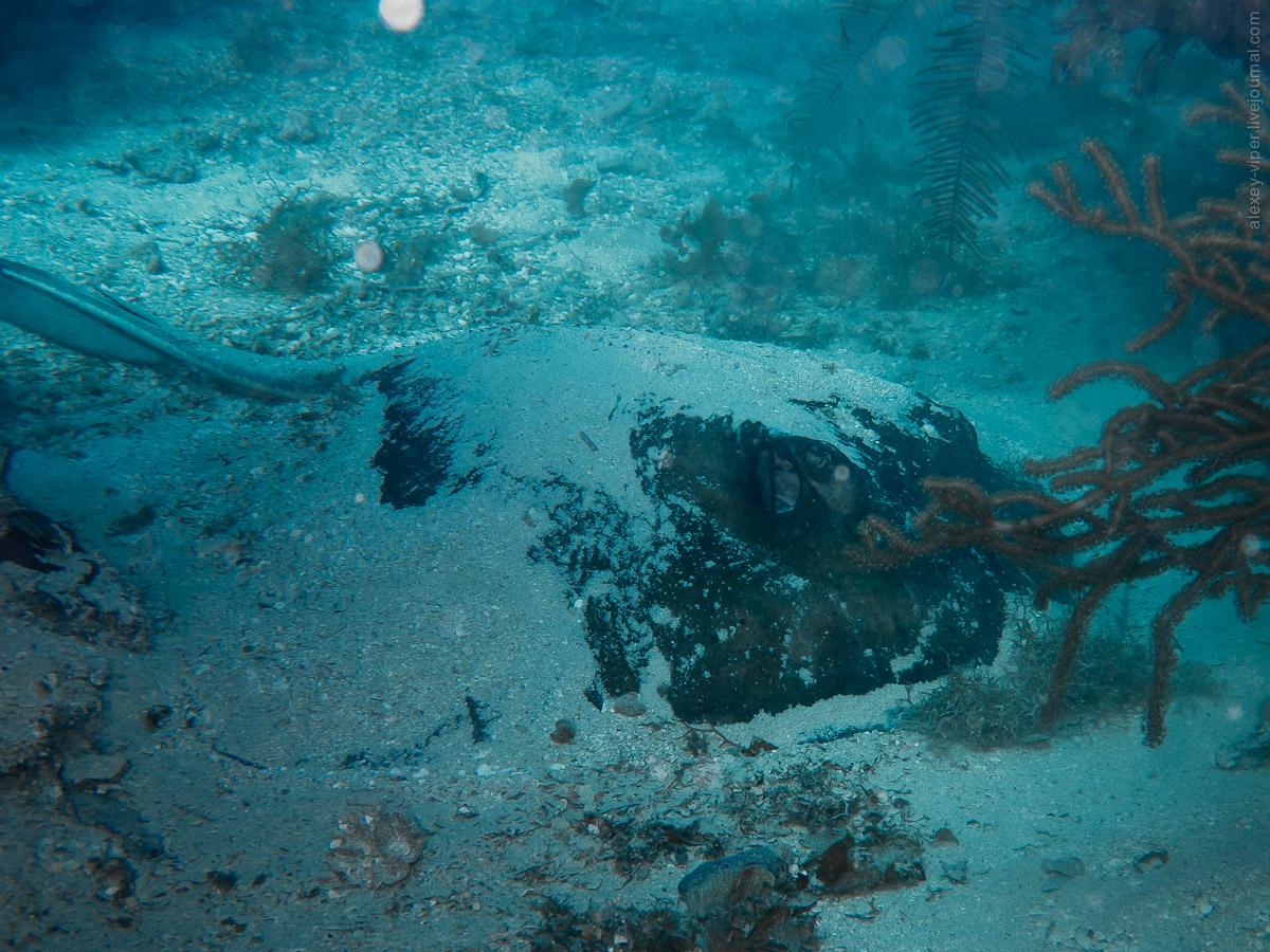 2012.01.12-2012.01.26_dive_safari_[cuba]-diving-011