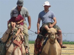 that's my camels