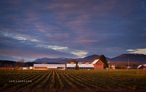 winter light sunset sky field clouds arlington barn rural washington strawberry berries pacific northwest farm sony strawberries wa fullframe alpha maxxum 850 a minolta50mmf17