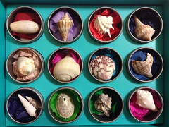 Shells of Sanibel Museum in a Box