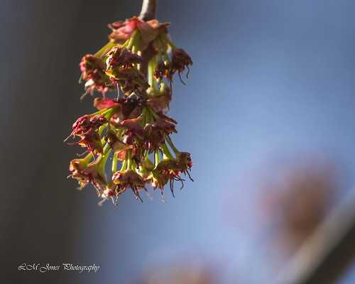 2014 04 05_Ault Blooms_0710a