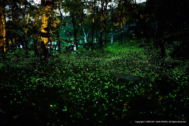 Firefly Galaxy -980C9779fu