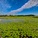 Wide Open at Crosswinds Marsh by Mike Boening Photography