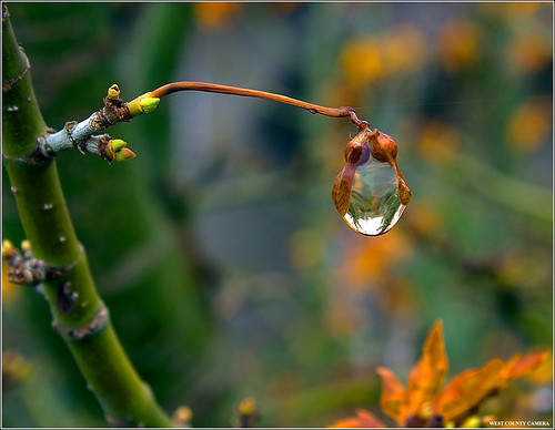 Solitary  drop of water