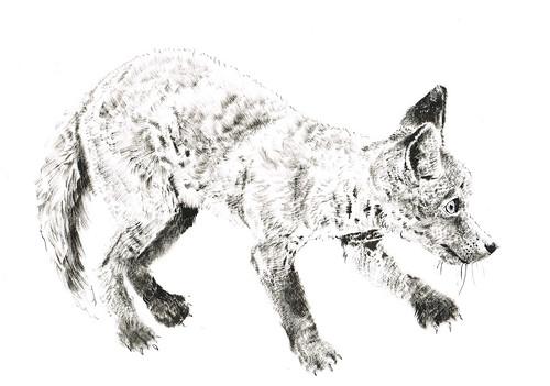 8) foxcub by jina11