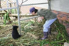 在小籠舍內觀察小熊。(楊吉宗 攝)