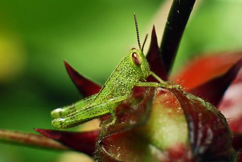 Baby bug