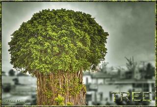0352 Tree