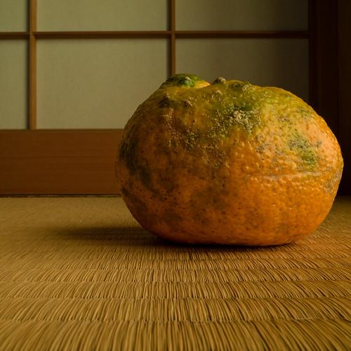 Ancient Variety Mikan (みかん Satsuma Orange) Fruit