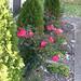 fall_leaves_20111106_21774