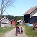 Small photo of Amish farm kids