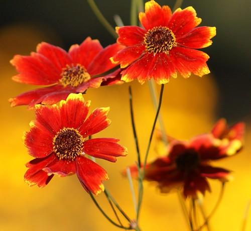 Flowers Colours